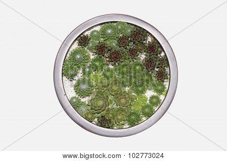 round pot with miniature succulent plants close up