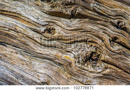 Background detail of old and dry wood with cracked texture