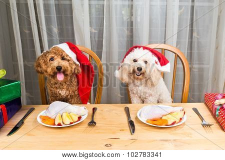 Concept Of Excited Dogs On Santa Hat Having Delicious Raw Meat Christmas Meal On Table.
