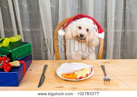 Concept Of Excited Dog On Santa Hat Having Delicious Raw Meat Christmas Meal On Table.