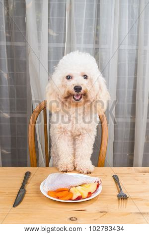 Concept Of Exciting Dog Having Delicious Raw Meat Meal On Table.
