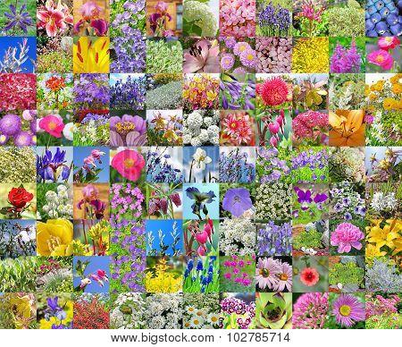 Decorative garden flowers