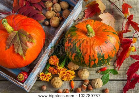 Two Pumpkins, Marigolds, Purple Leaves And Nuts On An Old Wooden
