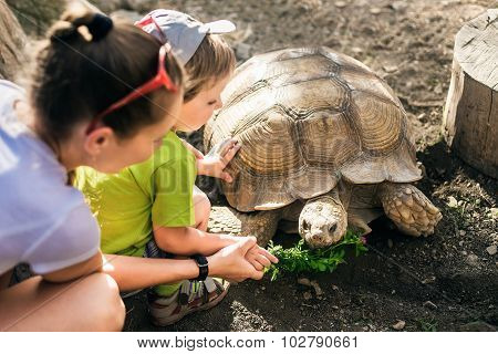 Large Sand Turtle And Boy