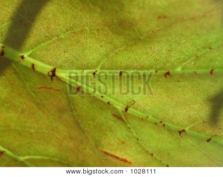 Leaf Structure 2