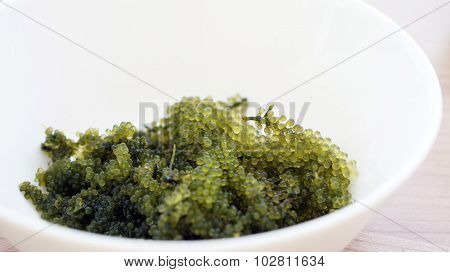 Sea Grape Seaweed, Uni Budou. Japanese Seaweed
