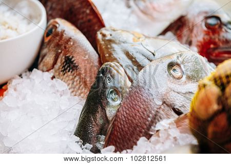 Delicious fresh fish on ice on market store shop. Dorado fish on
