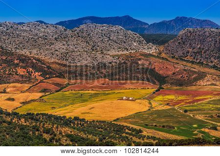 Landscape In Rural,  Andalusia, Spain.