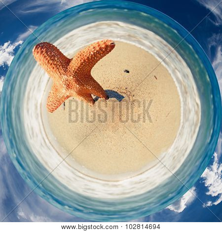 360 degree image of a orange starfish on the sandy beach with sea waves and sky around
