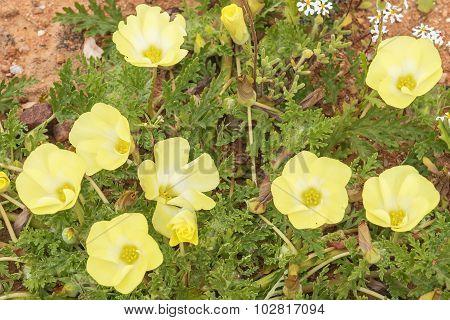 Pietsnot Flowers