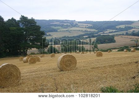 Round straw bales in an arable field