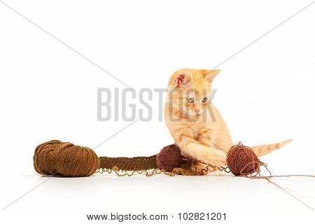Cute little red kitten playing with balls of yarn and looking straight at camera
