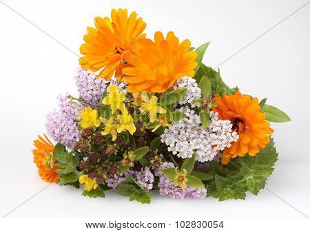 Bouquet Of Medicinal Herbs  On A White Background.