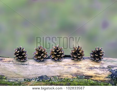 Pine cones arranged on a branch