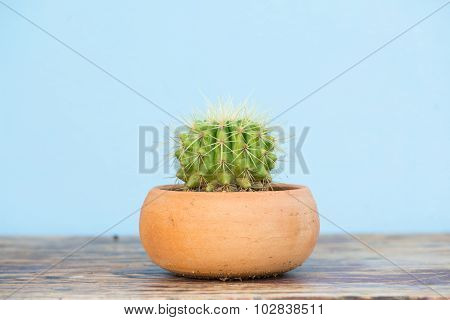 Cactus In Flower Pot On Wood Table