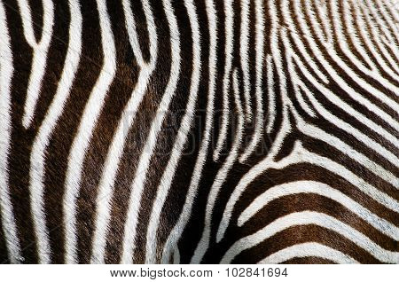 Zebra Fur Background