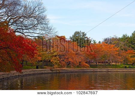 Autumn colors around Tidal Basin in US Capital.