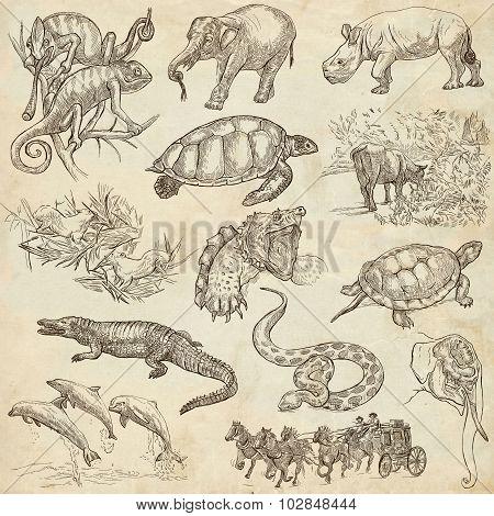 An Hand Drawn Pack, Line Art - Animals