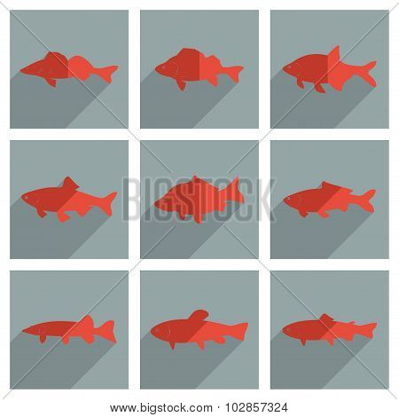 Set of freshwater fish with shadow flat concept modern design