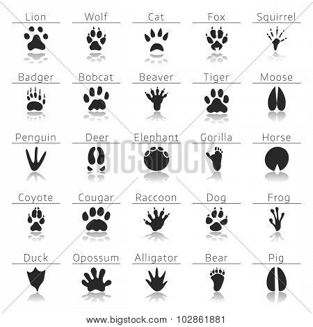 Animal track prints set