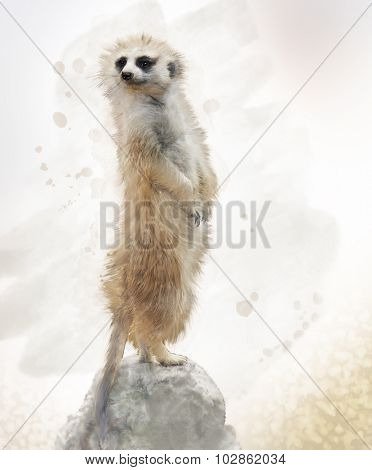 Digital Painting of Meerkat on a Rock