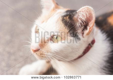 Close Up Eyes Of The Cat Blured Background