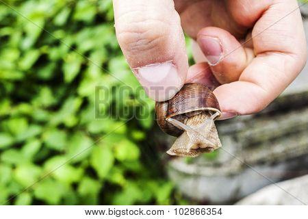 Captured snail