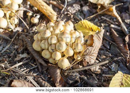 Mycelium near stump in the autumn forest, sunlight, close up