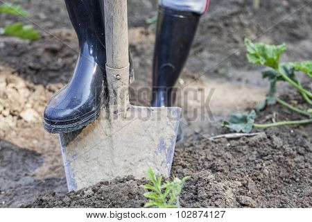 Woman Digging In The Garden With Black Boots