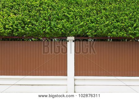 Small green plant on house wall outdoor