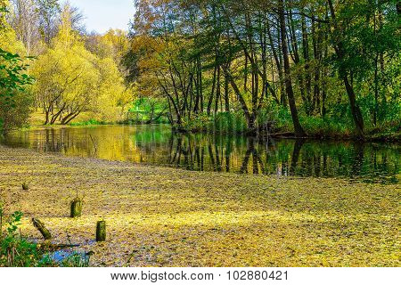 Autumn Landscape With Lake Covered Fallen Leaves