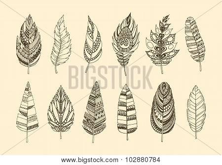 Set of ethnic feathers.