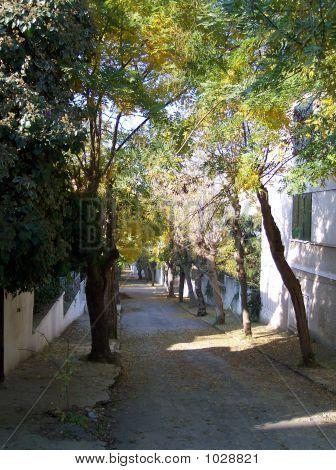 Street In Great Island