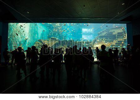 August 10 2014. Silhouette people in aquarium S.E.A Underwater world Singapore Resorts World Sentosa Singapore