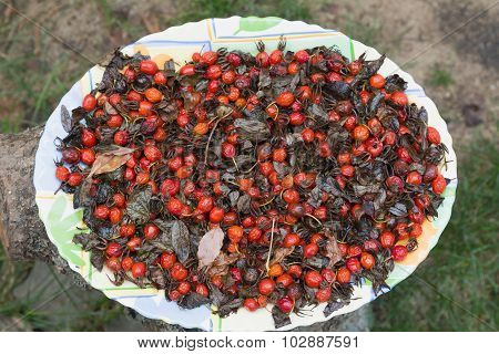 Dogrose Fruit On A Plate