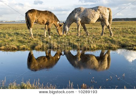 Two horses grazing in a pasture next to a stream