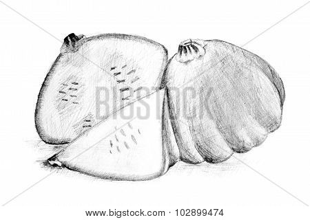 Original Pencil Drawing By The Bush Pumpkin Or Squash