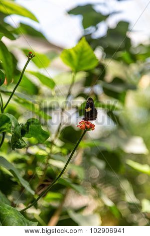 Black And Yellow Butterfly On Red Flowers