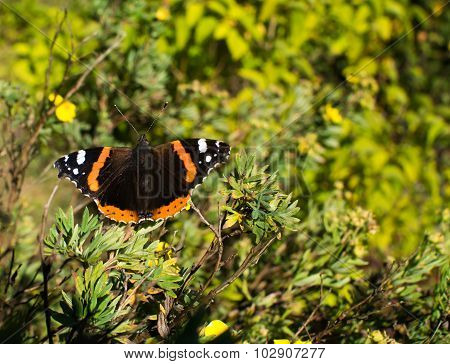 Norwegian butterfly and end of summer