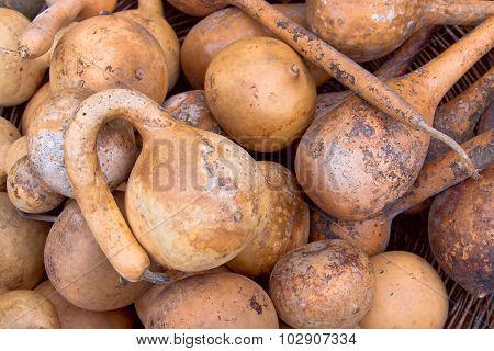 Natural Gourds