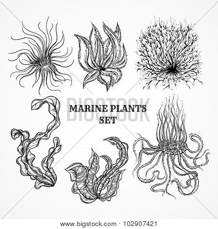 Collection of marine plants, leaves and seaweed. Vintage set of black and white hand drawn marine fl