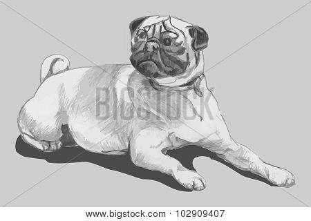 Pug Dog (freehand Drawing, Kids)