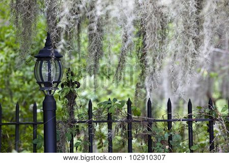 Spanish moss adorns a lamp post in Charleston, South Carolina.