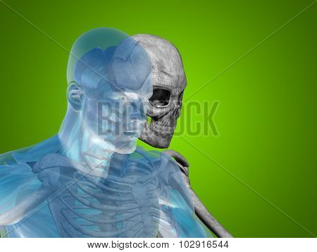 Anatomy concept or conceptual human man medical or health body chest, head green bright background