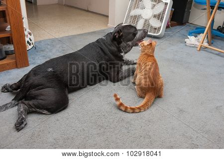 Big dog and small kitty from behind.