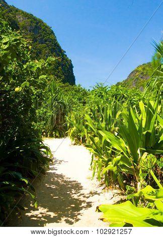 Paradise Scene Sunny Landscape