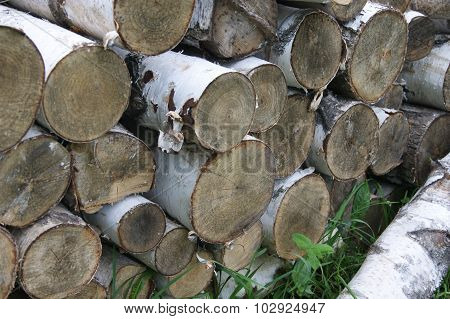 annual, aspen, circle, circular, close, up, color, image, colorful, concentric, cross, cut, cutting, detail, energy, firewood, forest, forestry, fuelwood, growth, heat, history, industry, life, log, lumber, macro, material, natural, nature, orange, organi
