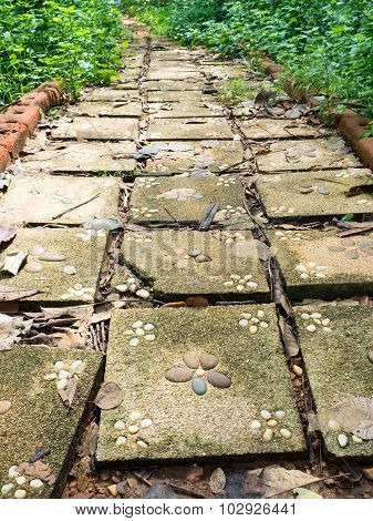 Flagstone walkway with plant