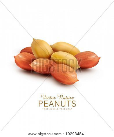 Vector peanut kernels isolated on a white background (design element)