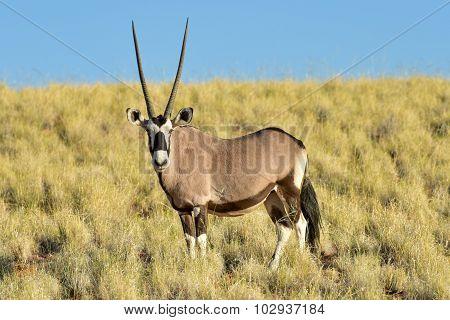 Desert Landscape - Namibrand, Namibia